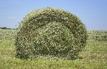 Close up of round bale